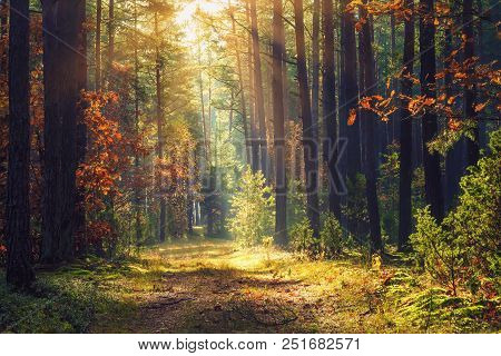 Autumn Forest Landscape. Colorful Foliage On Trees And Grass Shining On Sunbeams. Amazing Woodland.