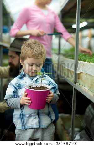 Grow Plant. Small Boy With Mother Grow Plant. Plant Care. Kid Grow Family Tree In Greenhouse. Small