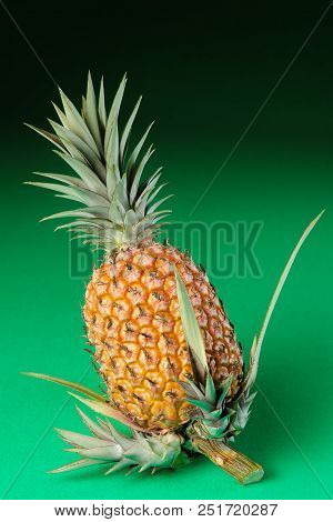 Pineapple Whole Organic Green Background With New Shoots On Stem