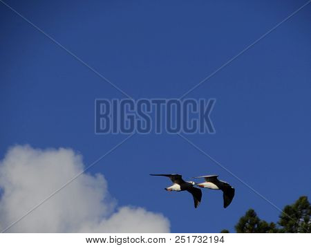 Flying Gulls On Autumn Sea, City Park, Neuss
