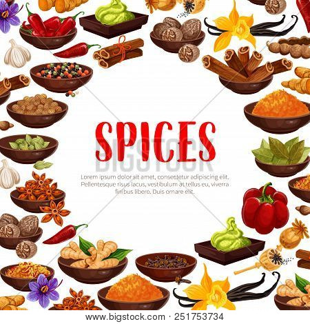 Spices Poster Of Herbal Seasonings. Vector Design Of Chili Pepper, Vanilla Or Cinnamon And Cardamom,