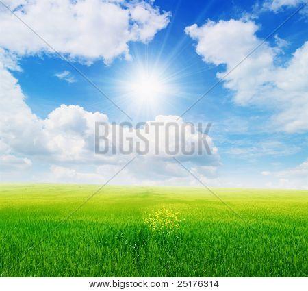 green field and sun sky