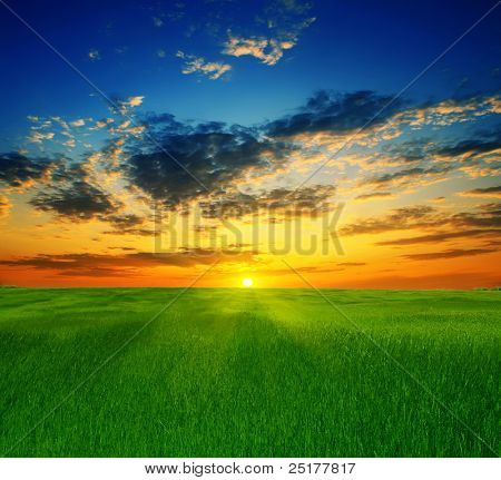 summer landscape on a background beautiful sunset