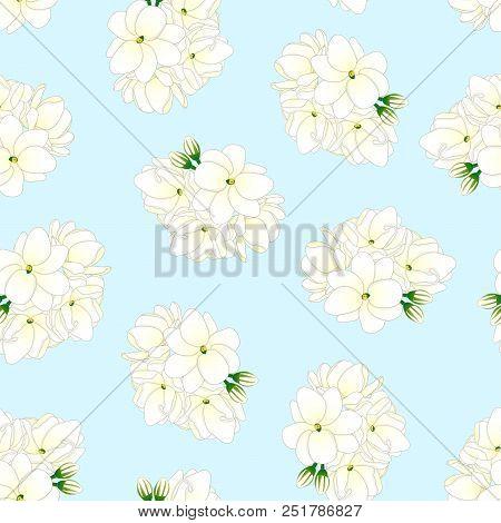 Jasminum Sambac - Arabian Jasmine On Light Blue Background. Vector Illustration.