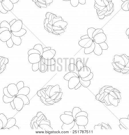 Jasminum Sambac - Arabian Jasmine Outline Seamless Background. Vector Illustration.