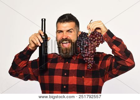 Winegrower With Happy Face Presents Product Made Of Grapes. Man With Beard Holds Bunch Of Grapes And