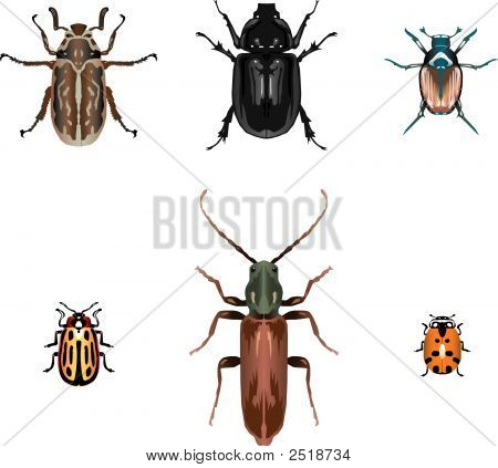 Six vector beetle illustrations including ladybug and japanese beetle poster