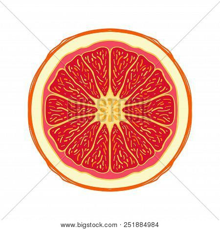 Sliced Colored Sketch Style Fruit Red Grapefruit Isolated On White Background. Half Of Fruit. Bio Fo
