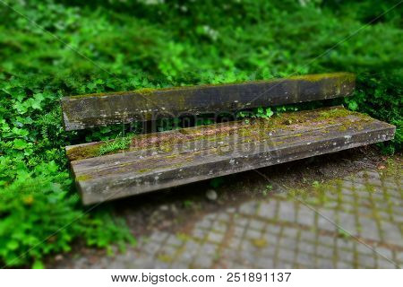 Bizarre Idyllic Rotten Bench, Weathered Wooden Bench In Focus With Moss And Ivy Overgrown
