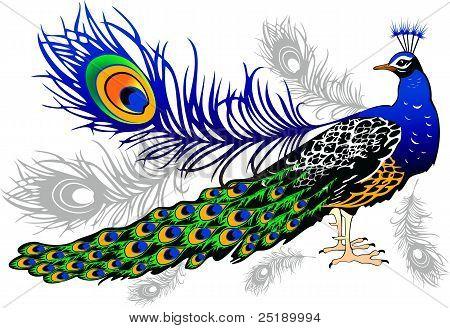 Peacock.eps