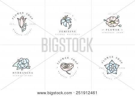 Vector Feminine Signs And Logos, Templates Set. Floral Illustration-hydrangea, Ranunculus, Anemone A