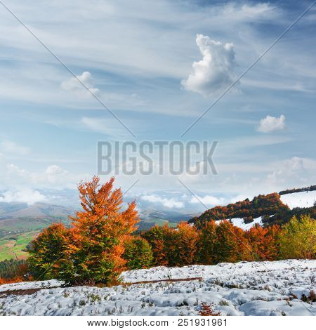 Amazing scene on autumn mountains. First snow and orange trees in fantastic morning sunlight. Carpathians, Europe. Landscape photography