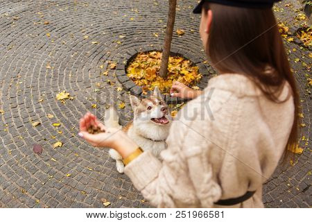 Playful Dog Eating From Female Hand - Woman Feeding Husky At City Park. Concept Of Domestic Animals