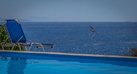 A Swallow Is Flying Over Sea By A Swimming Pool