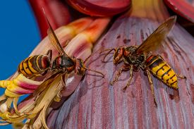 Hornets Are Fighting Together For Their Territory