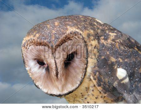 Owl Masked