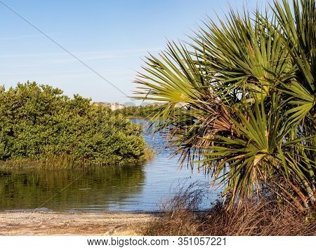 Water Scene With Palm Trees And Smooth Blue Sky In Anastasia State Park In St. Augustine, Florida Ri
