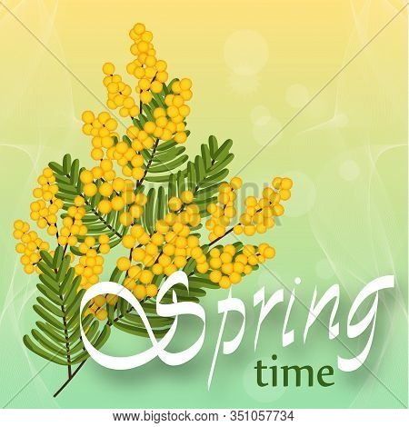 Mimosa On Light Background. Spring Yellow Flowers. Template For Spring Holidays, Banner Social Netwo