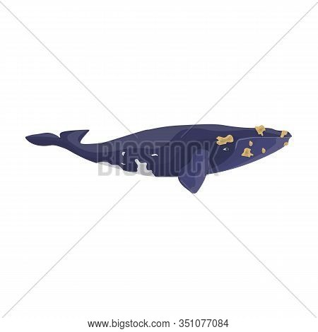 Whale South Smooth Japanese Icon.cartoon Vector Icon Isolated On White Background Whale South Smooth