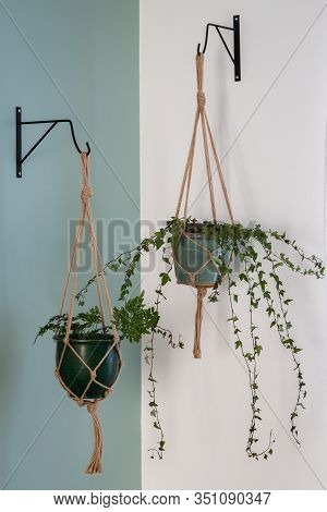 Macrame Duo Hanging On A Bicolor Wall