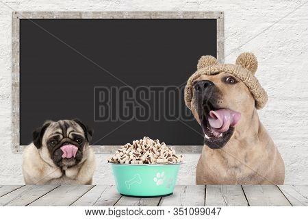 Two Cute Dogs Licking Their Mouth, Rolling Tongue, Waiting For Kibble Treats, Sitting At Table, With