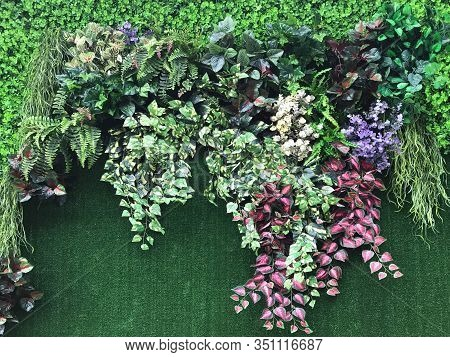 Beautiful Wall From Various Artificial Creeper Plant For Background