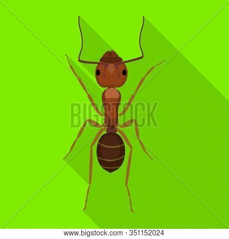 Ant Vector Icon.flat Vector Icon Isolated On White Background Ant .