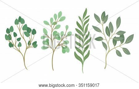 Tree Twigs And Branches With Green Leaves Vector Set