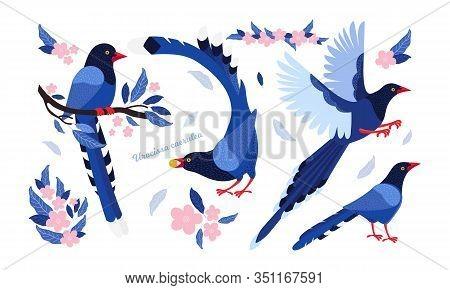 Taiwan Azure Magpie. Set Exotic Birds Of Taiwan And Of Asia. Urocissa Caerulea. Cute Blue Cartoon Bi