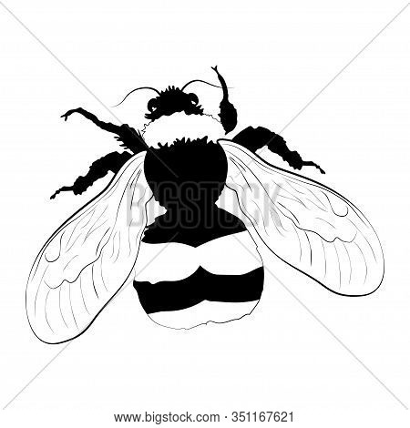 Bumblebee Silhouette Isolated On White Background. Vector.