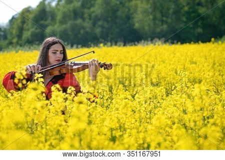 Young Woman Standing In Yellow Oilseed Rape Field And Playing Violin - Image