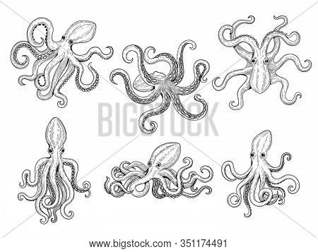 Octopus. Ocean Fishes Big Underwater Monster Wild Squid Vector Hand Drawn Marine Tattoo Template. Il