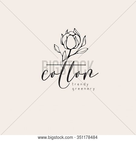 Cotton Plant Logo And Branch. Hand Drawn Wedding Herb, Plant And Monogram With Elegant Leaves For In