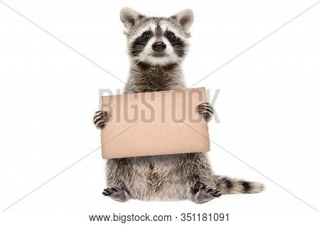 Funny Raccoon Standing With A Cardboard In Paws Isolated On White Background