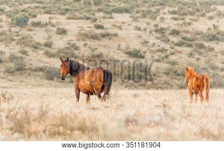 Wild Horses Of The Snowy Mountains Wilderness Of Australia
