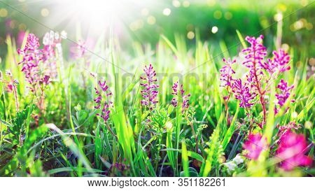 Sring Nature Background With Green Grass And Flowers