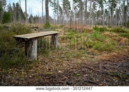 Bench Near Path In Swedish Forest In Kumla Sweden