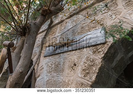 Jericho, Israel, January 25, 2020 : Stuffed Jordanian Varan Attached To A Wall In The Courtyard Of T