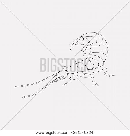 Earwig Icon Line Element. Vector Illustration Of Earwig Icon Line Isolated On Clean Background For Y