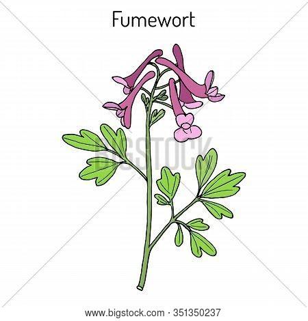 Fumewort Corydalis Solida , Medicinal Plant. Hand Drawn Botanical Vector Illustration