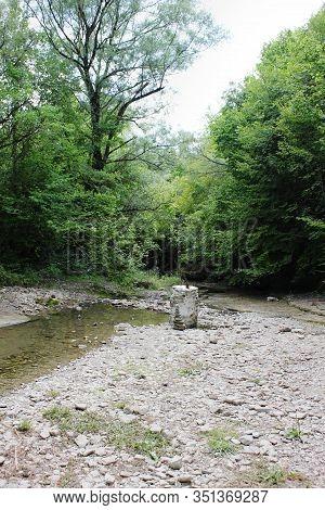Abandoned Trees And Underbrush In Vikos Gorge Epirus Greece
