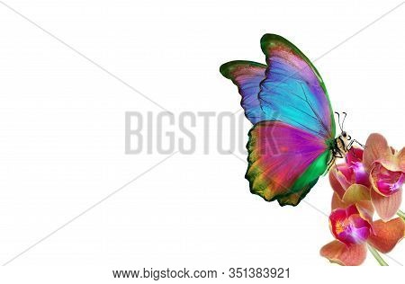Tropical Nature. Multicolored Tropical Butterfly. Bright Tropical Morpho Butterfly On Colorful Orchi