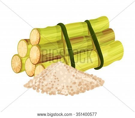 Sugar Cane Strong Unbranched Stems Cut And Corded With Pile Of Refined Sugar Rested Nearby Vector Il