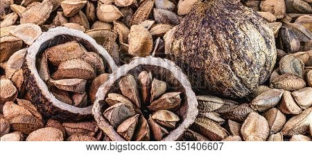 Chestnuts From Pará, Also Known As Brazil Nuts (in Portuguese: Castanha-do-pará Or Castanha-do-brasi