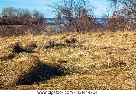 Mounds Of Dormant Beach Grass During Wintertime In Plum Island, Massachusetts, Usa
