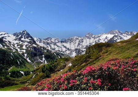Deep Blue Sky, Snow-capped Mountains And Alpine Roses In The Foreground, Landscape In South Tyrol, I