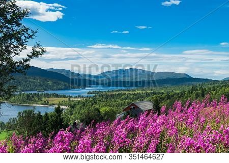 Landscape With Flowers Of Norway In Summer. Norwegian Nature And Nordic Typical Red Fishing Houses A