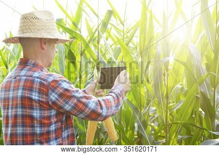 Farmer Using Tablet Computer For Inspecting Maize Corn Field. Harvest Care Concept