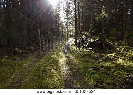 Sun Beams By A Winding Mossy Forest Road In A Spruce Forest