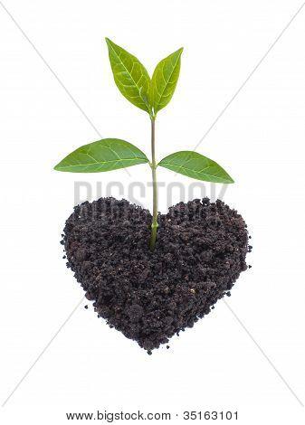 Eco-Liebe